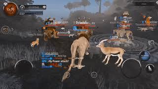 Wild Animals Online - Fight Club