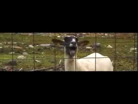 Taylor I Knew You Were Trouble (GOAT VERSION)