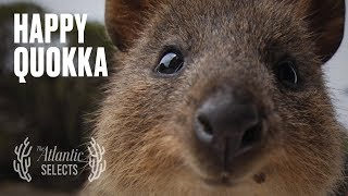 Download The World's Happiest Animal Mp3 and Videos
