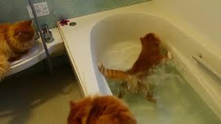 Привет, теперь я убедился что коты боятся воды