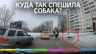 Помните собаку, которой помог перейти дорогу сотрудник ГИБДД? Вот что с ней стало