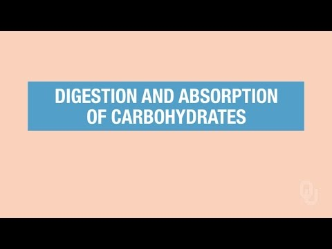 Human Physiology - Carbohydrates Digestion and Absorption