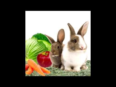 Как определить ожирение у декоративного кролика?