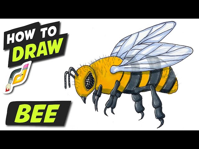 How to Draw BEE - Fun Easy Simple step by step