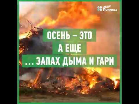 Почему нельзя сжигать листья и сухую траву