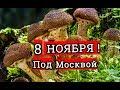 25 ноября грибы