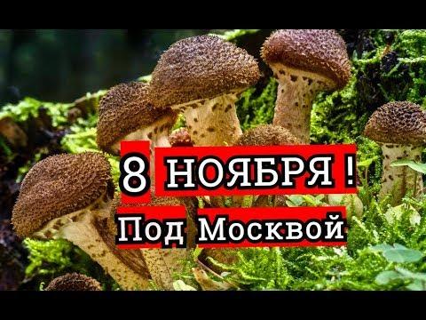 грибы ноября