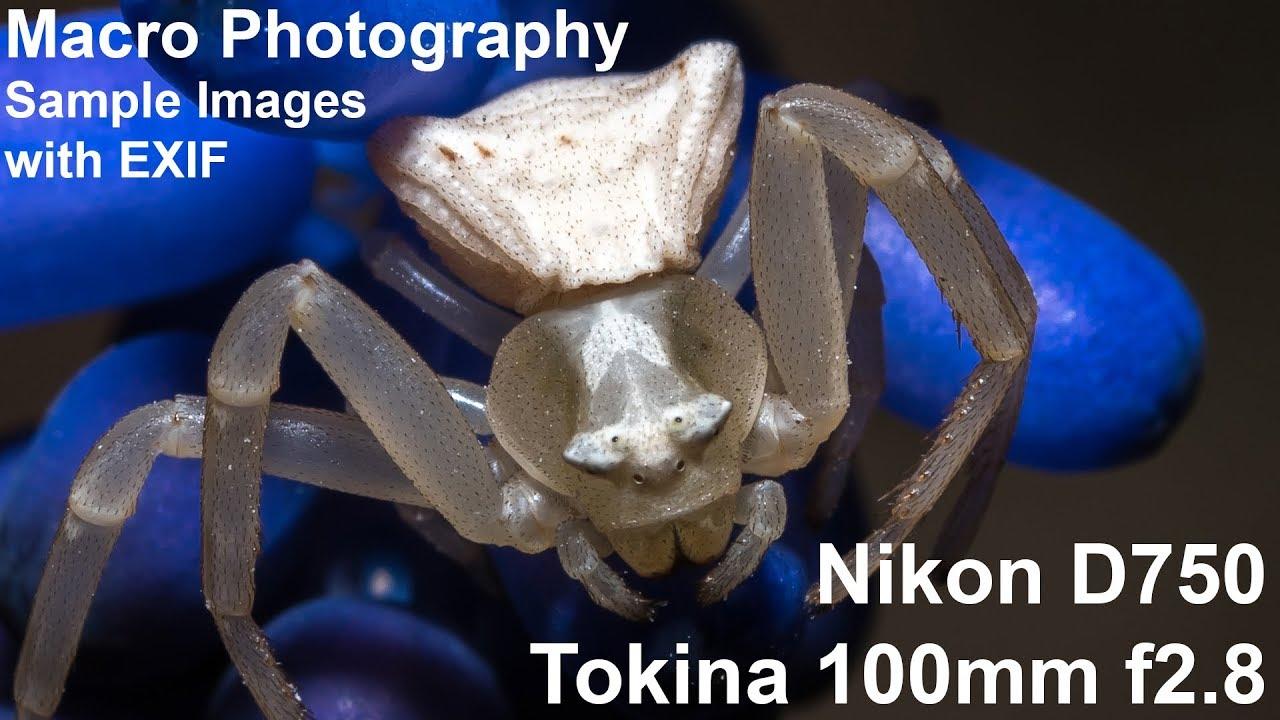 Tokina 100mm f2 8 macro & Nikon D750 sample images - Handheld macro  photography in nature