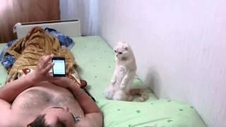 Кот патриот своей страны!Кот слушает гимн России стоя на коленях!