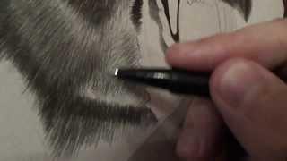 Рисунок карандашом (пантера)(небольшое видео процесса прорисовки шерсти., 2014-02-17T14:38:58.000Z)