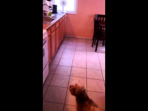 Silly dog barks at fan