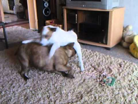 Sex mit hund tube