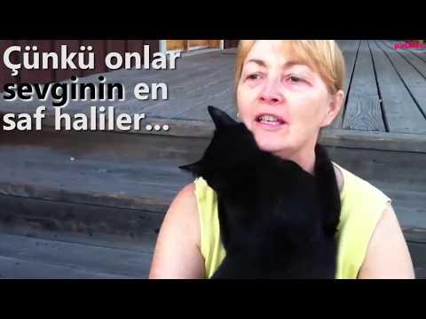 Sokak Kedilerini Çok Sevenlerin Anlayabileceği 11 Üzücü Durum