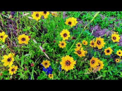 Flower Mound, Texas | Briggs Freeman Sotheby's International Realty