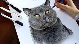 «Большие друзья»: британские кошки