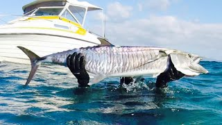 Spearfishing Australia 2018, Catch and cook Ep 1- Spanish Mackerel Kebabs