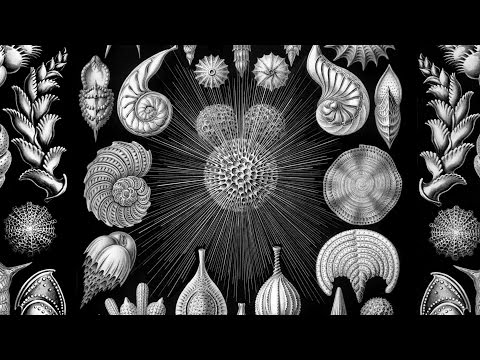 Shelf Life Episode 6 - The Tiniest Fossils