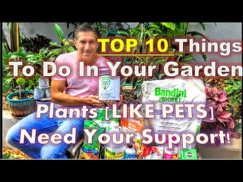 Top 10 Things To Do In Your Garden | Plants (LIKE PETS) Need Your Support!