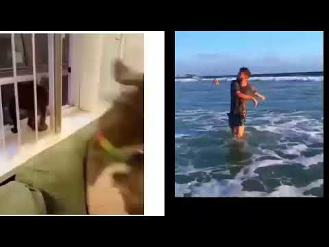 New Funny Videos People doing stupid things