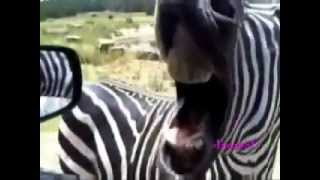 Video per te qeshur ( me kafshet)