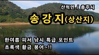 [충주]_ 송강지 피서 낚시 / 한여름에도 추운 특급 계곡지 / 초록 붕어 / 충북 충주시 산척면
