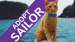 Video Adopt Sailor - Sailor walks through our Thrift Store download MP3, 3GP, MP4, WEBM, AVI, FLV Oktober 2017