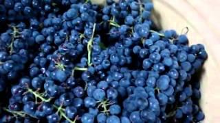 Рецепт приготовления домашнего виноградного вина, часть 1(Как приготовить домашнее вино из выращеного винограда. Вся рецептура и порядок добавления ингредиентов..., 2015-03-16T11:11:47.000Z)