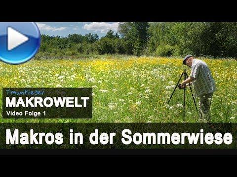 Makrofotografie in der Sommerwiese  - mit Stacking-Techniken