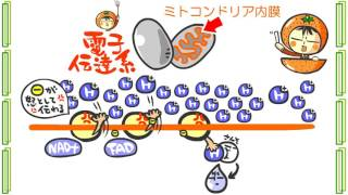 生物1章8話「ATPを作る呼吸」byWEB玉塾