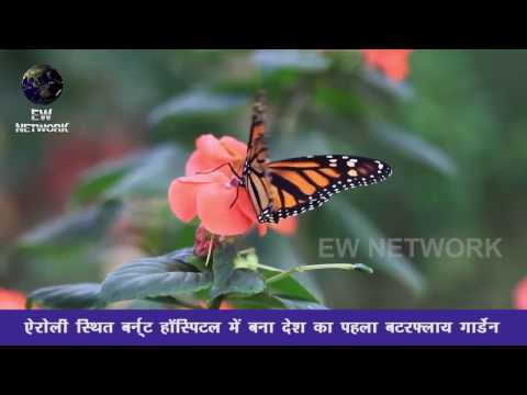 India's first Butterfly Garden at National Burnt Centre