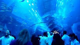 Аквариум в Дубай Молле.(, 2010-02-27T08:46:38.000Z)