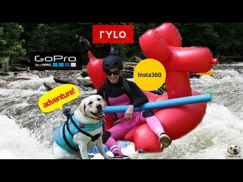 360 Camera for Pets! 2018 Buyers guide #AndietheLab #Insta360 #Rylo