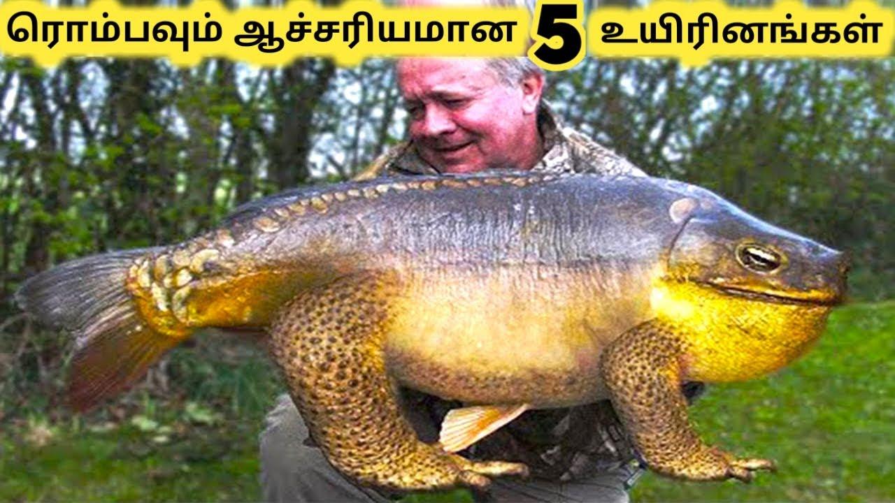 திறமைகள் உள்ள உயிரினங்கள் || Five Amazing Incredible Creatures Part 14 || Tamil Galatta