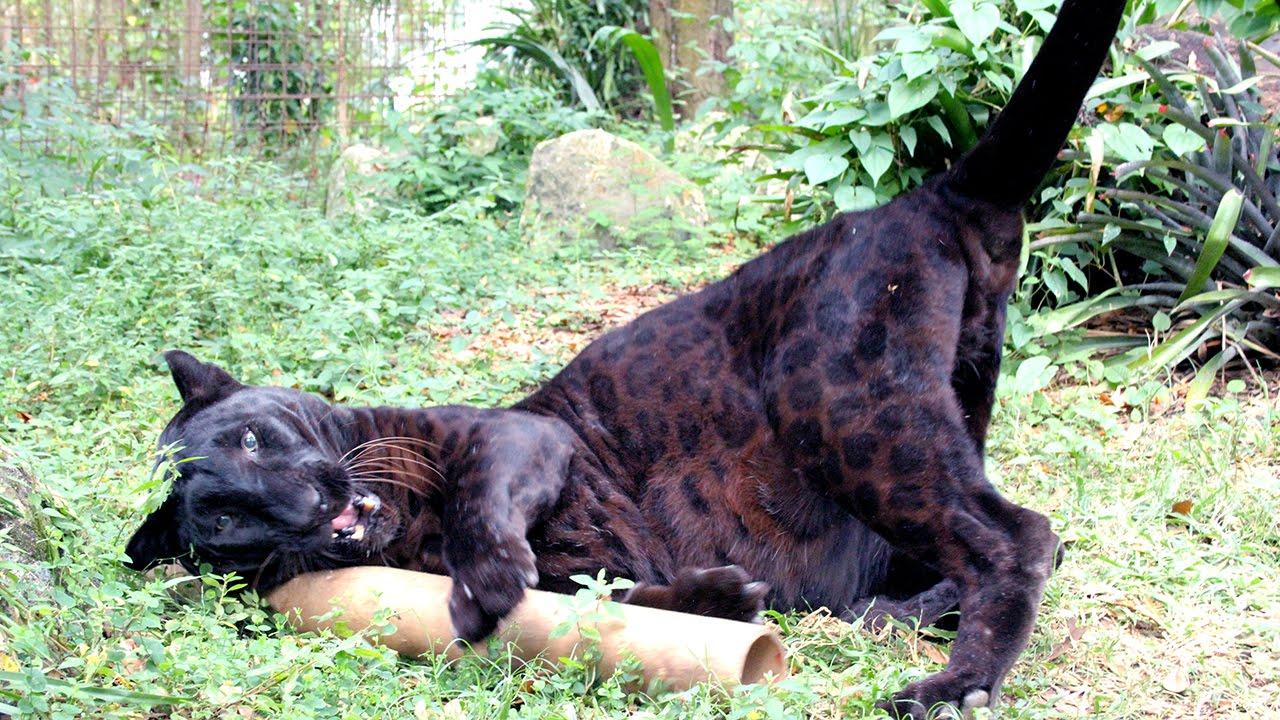 cat body pillow