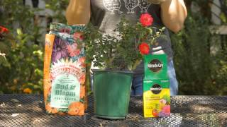 How to Best Fertilize Roses : Garden Space