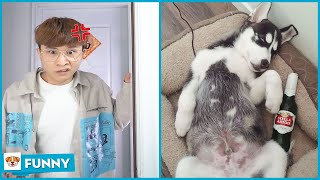 When Dong Yang cook noodle for parents  Dog Funny Moments 2021 V17  Dogs funny video