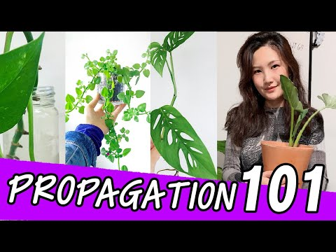 HOW TO PROPAGATE HOUSEPLANTS FROM CUTTINGS | Propagate Pothos , Monstera, Snake Plant & more