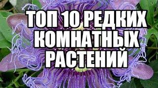 ТОП 10 САМЫХ РЕДКИХ КОМНАТНЫХ РАСТЕНИЙ