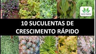 10 Suculentas de Crescimento Rápido