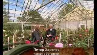 «Роза». Фильм Павла Лобкова.