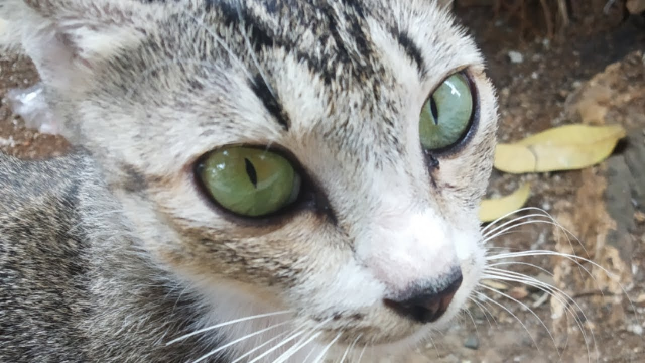 Kenapa Kucing Suka Gigit Kaki Karena Kucing Gelisah Takut Di