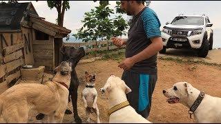 KÖPEKLERİM HAPI YUTTU :)) ( köpeklerimin parazit hapları verdim ) #dogoargentino #canecorso #malaklı thumbnail