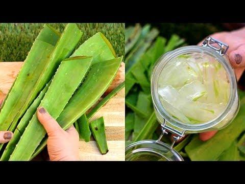 How To Make Aloe Vera Gel At Home |100% Organic & Fresh | Benefits Of Using Aloe Vera Gel