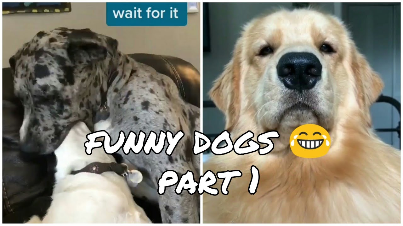Funny dogs moments 😂😂 Try not to laugh - Part 1 - Funny Cate