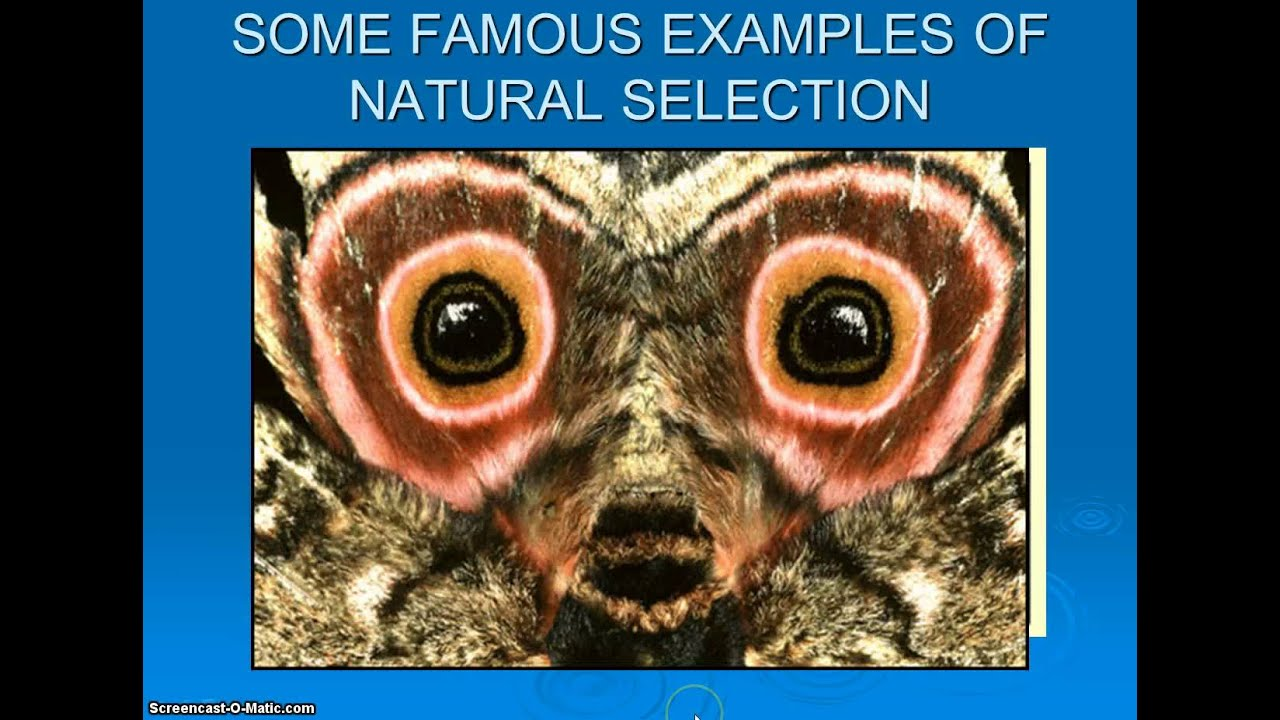 Evolution Video 2 Examples & Types of Natural Selection - YouTube