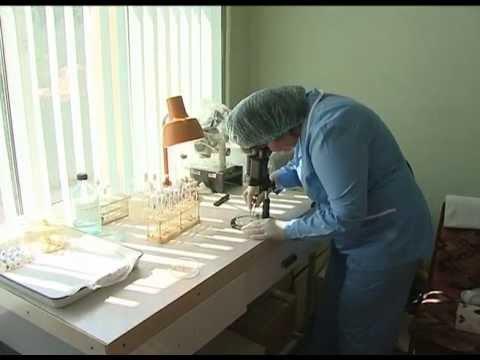 Жители Ростовской области умирают от  укусов клещей