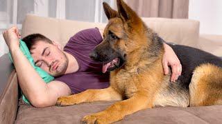 German Shepherd Reacts to My Snoring
