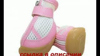 Зимняя обувь для собак мелких пород екатеринбург