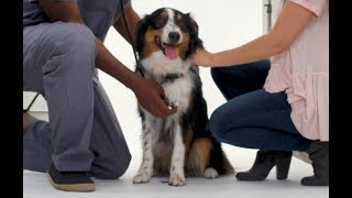 Tips to Help Keep Your Pets Safe at Home | Allstate Insurance
