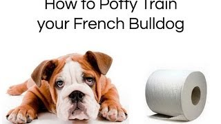 How To Train Bulldog : How To Potty Train Your French Bulldog